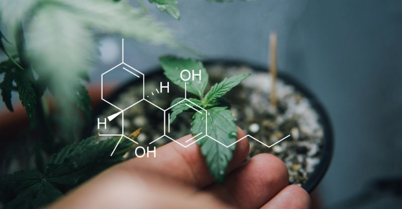 Does CBD Affect Your Social Interactions