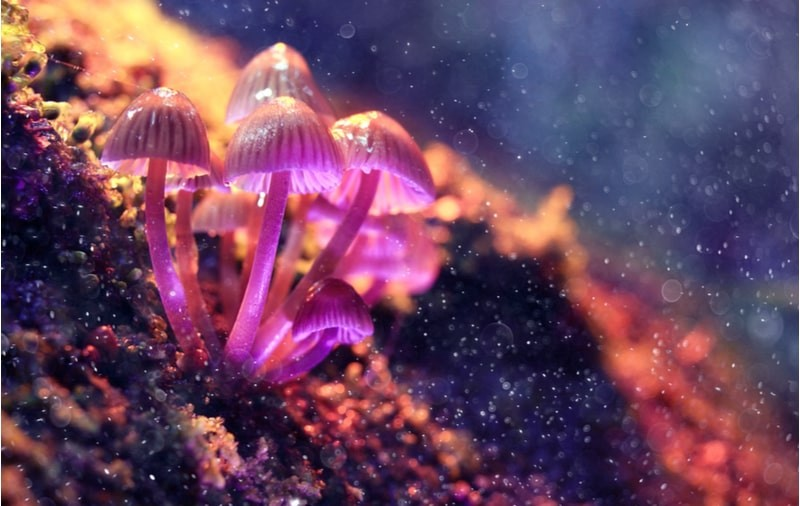 What are Psychedelics?